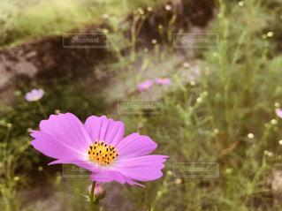 近くの花のアップの写真・画像素材[1490515]
