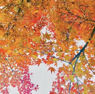 近くの木のアップの写真・画像素材[1614170]