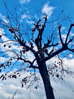 空,フルーツ,樹木,果実,カキ,柿
