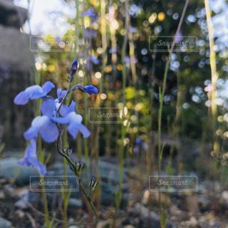 紫の花の写真・画像素材[2033475]
