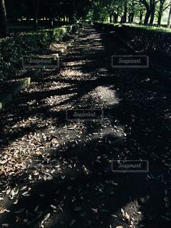 自然,屋外,晴れ,散歩,水面,地面,草木,シャドウ,日中,木かげ