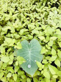 雨,屋外,緑,葉,景色,ハート,新緑,草木,ガーデン