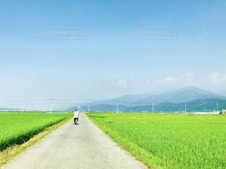 緑の野原のクローズアップの写真・画像素材[2287358]