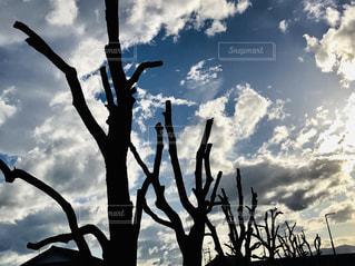 雲と青い空の木の写真・画像素材[2418023]