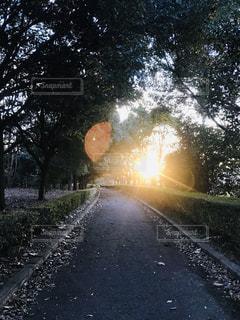 自然,空,屋外,太陽,光,樹木,道