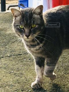 猫,動物,屋外,ペット,子猫,人物,立つ,地面,ネコ,ネコ科の動物