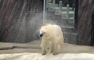 休日,しろくま,おでかけ,上野動物園