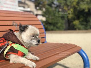 公園,わんこ,休日,お散歩,おネム,睡魔,休日の散歩,休日のひと時