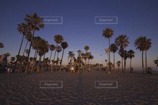 自然,公園,ビーチ,砂浜,海岸,アメリカ,旅行,カリフォルニア,パーム,Los Angeles,Venice beach
