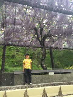 風景,空,公園,花,春,屋外,ピンク,緑,藤,樹木,男の子