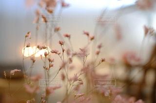 アウトドア,花,森林,木,旅行,flower,休日