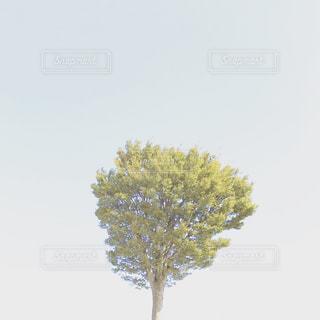 自然,空,木,景色