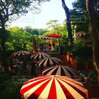 カフェ,メルヘン,森林浴,こびと,森の中のカフェ