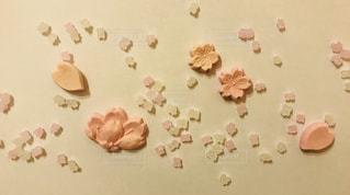 桜 咲くの写真・画像素材[1069296]