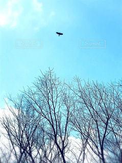 青空の写真・画像素材[1104562]