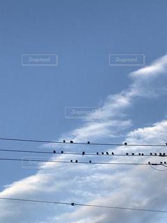 鳥達のおしゃべりの写真・画像素材[1104651]
