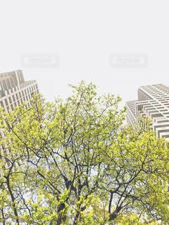 背の高い木の写真・画像素材[1159708]