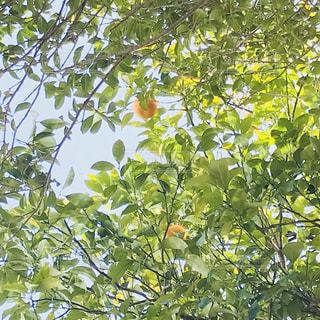 近くの木のアップの写真・画像素材[1159709]