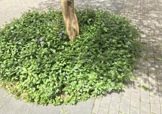 クローズ アップ庭園のの写真・画像素材[1160276]