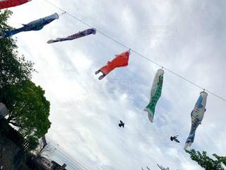 宙を舞う凧の写真・画像素材[1164898]