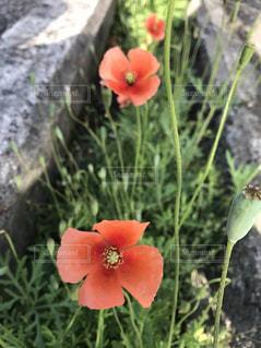 近くの花のアップの写真・画像素材[1164950]