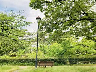 ツリーの横にある空の公園ベンチの写真・画像素材[1167018]