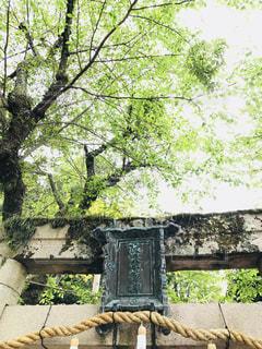 庭のベンチの写真・画像素材[1167038]