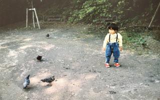 地面に鳥と少年の写真・画像素材[1185081]