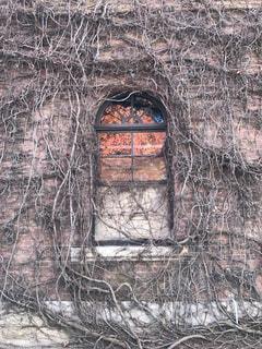 背景の木と建物の写真・画像素材[1195009]