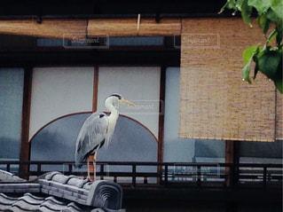 建物の上に座っている鳥の写真・画像素材[1679384]