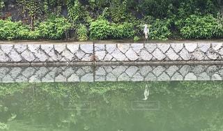 背景の水の庭の写真・画像素材[1679390]