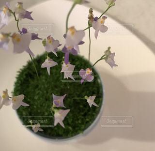 花の写真・画像素材[1996799]