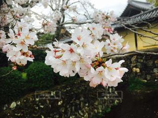 近くの花のアップの写真・画像素材[1107243]