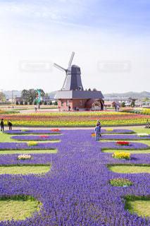 かみゆうべつチューリップ公園の写真・画像素材[1202611]