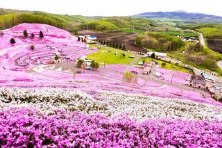 ひがしもこと芝桜公園の写真・画像素材[1202615]