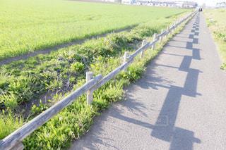 長い緑の草の写真・画像素材[1260269]