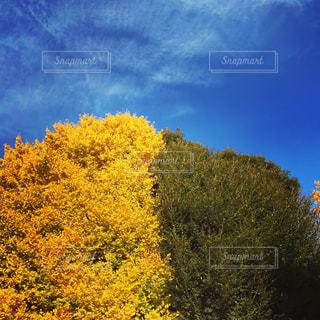 自然,風景,空,屋外,東京,緑,黄色,渋谷,コントラスト,yellow