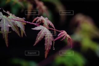 自然,雨,屋外,緑,水滴,葉,鮮やか,樹木,グリーン,梅雨,雨粒,草木