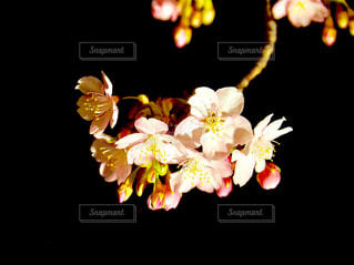 春の訪れの写真・画像素材[1207225]