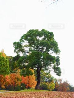 イケメンな木の写真・画像素材[1215188]