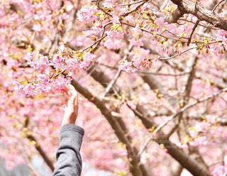 待ってたよ、春!の写真・画像素材[1383231]