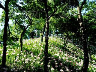 花畑の写真・画像素材[1383273]