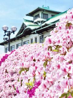 春,ピンク,きれい,満開,旅行,ピンク色,桃色,クラシック,愛知県,つつじ,つつじ祭り,蒲郡市,蒲郡クラシックホテル