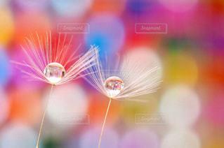 水滴と玉ボケの写真・画像素材[2123870]