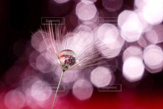 ピンクの魔法の写真・画像素材[2124309]