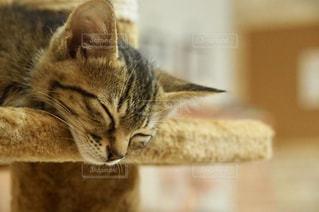 寝顔の写真・画像素材[2303724]