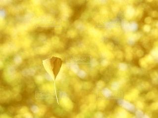 黄色の世界の写真・画像素材[2601618]