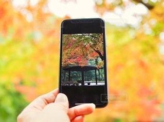 秋を撮るの写真・画像素材[2601651]