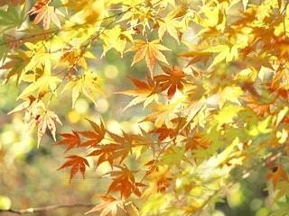 秋の彩りの写真・画像素材[2601763]