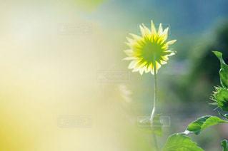 光への写真・画像素材[2997441]